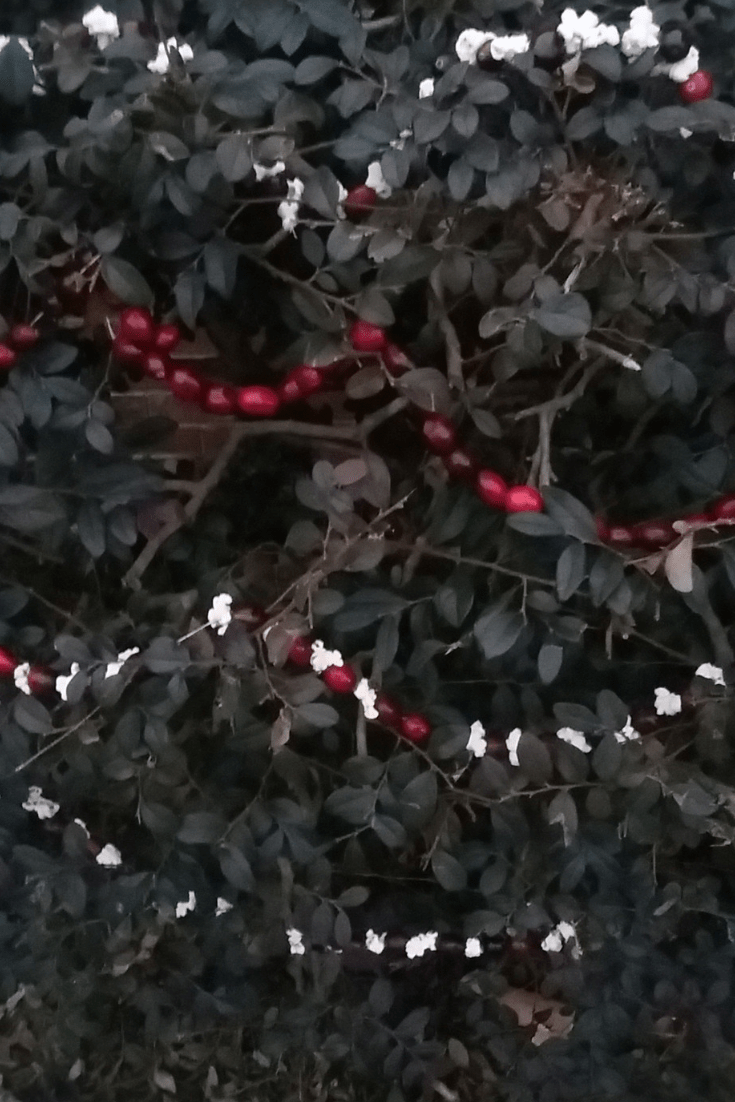Cranberry and Popcorn Bird and Wildlife Garland