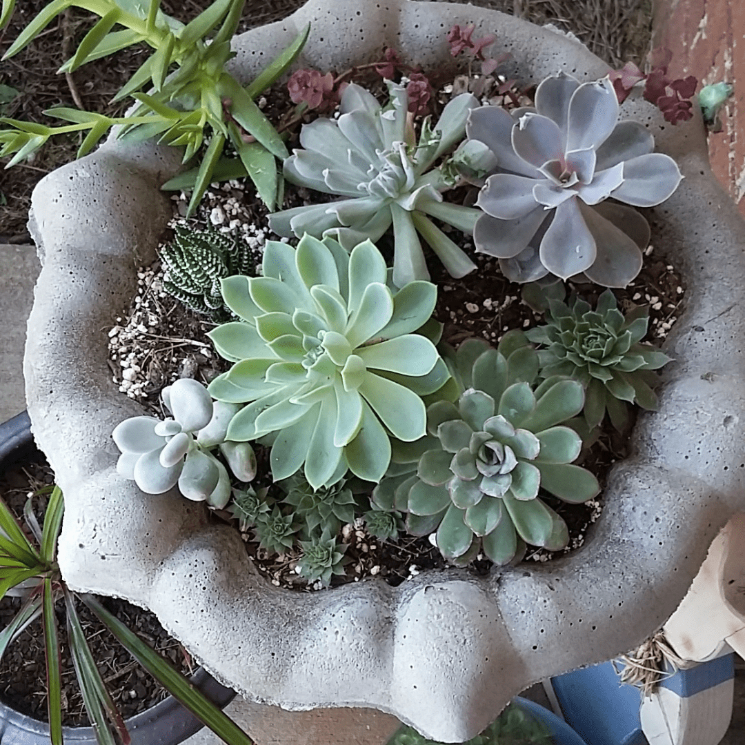 Succulent Bird Bath D.I.Y.