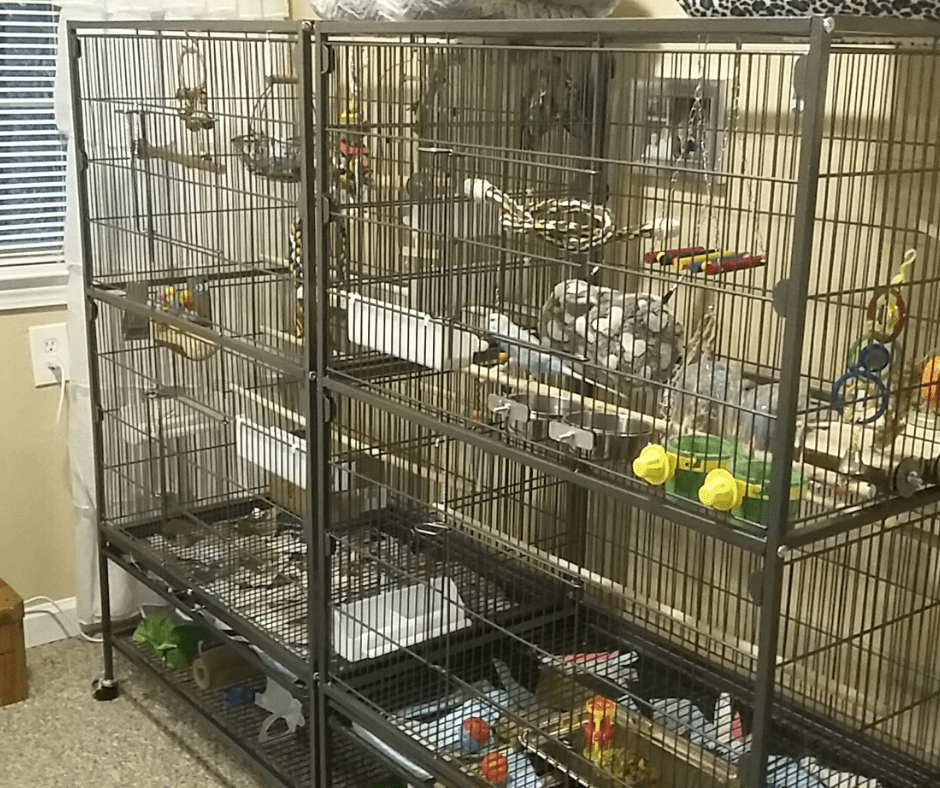 I Adopted 2 Female Lovebirds From PetFinder