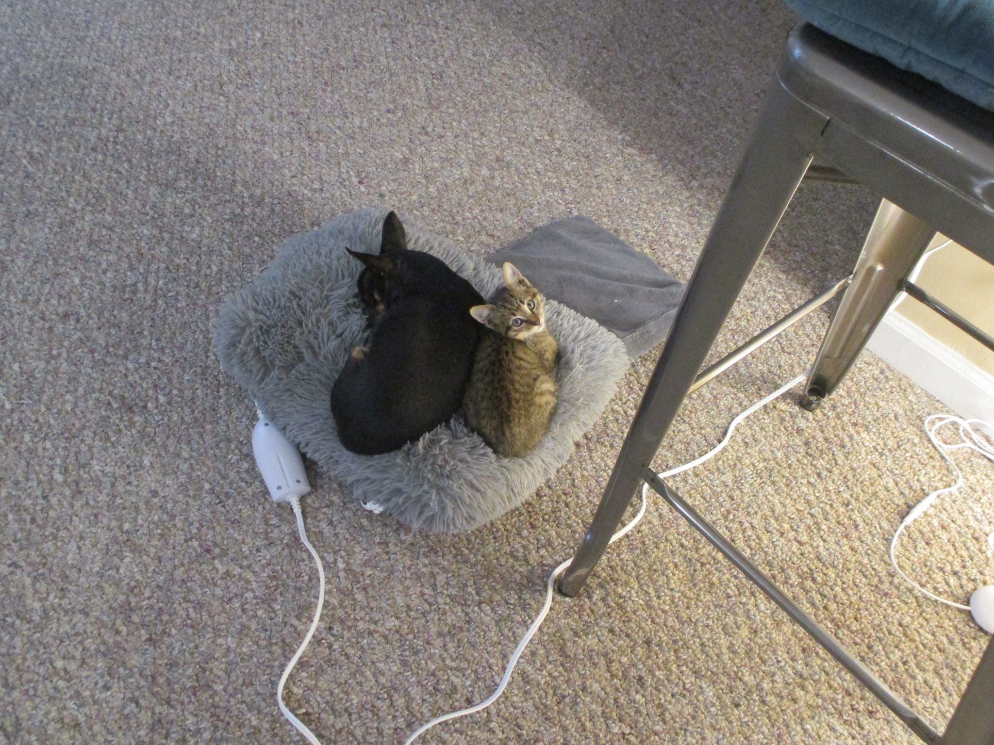 New Kitten Named Hood Cat