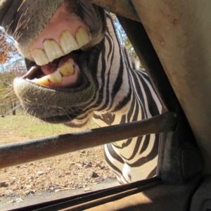 Wild Animal Safari In Georgia